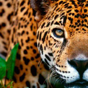 Selva – Perú